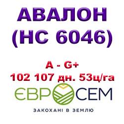 Подсолнечник АВАЛОН ( НС 6046 ) A — G+