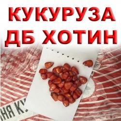 ХОТИН ДБ — семена кукурузы ФАО 250