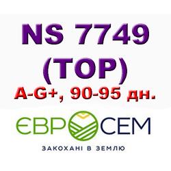 Подсолнечник ТОР G+ | НС 7749 — ультра-ранний гибрид