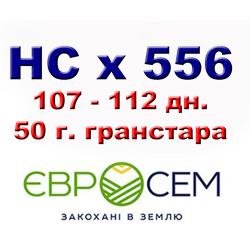 НСХ 556 Подсолнечник под гранстар 50г.