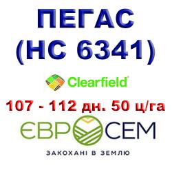 Подсолнечник ПЕГАС ( НС 6341 ) под евролайтинг