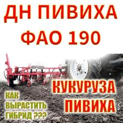 Семена кукурузы Пивиха ДН ФАО 190