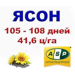 Семена подсолнечника «Ясон 107-108»